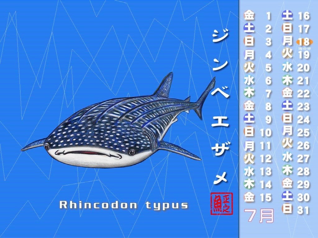ジンベイザメのイラストbyさかなクン
