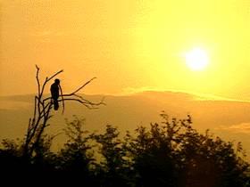 エバーグレーズ国立公園の画像 p1_3