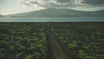 ピコ島の画像 p1_15