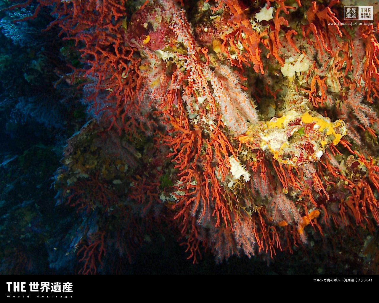 ポルト湾の画像 p1_29